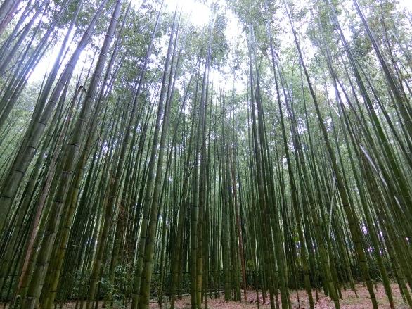 Bamboo!!!!